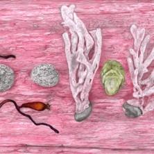 erik odijk roze tekening