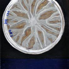 petri-2-rgb-web