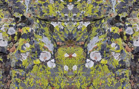gespiegelde korstmossen